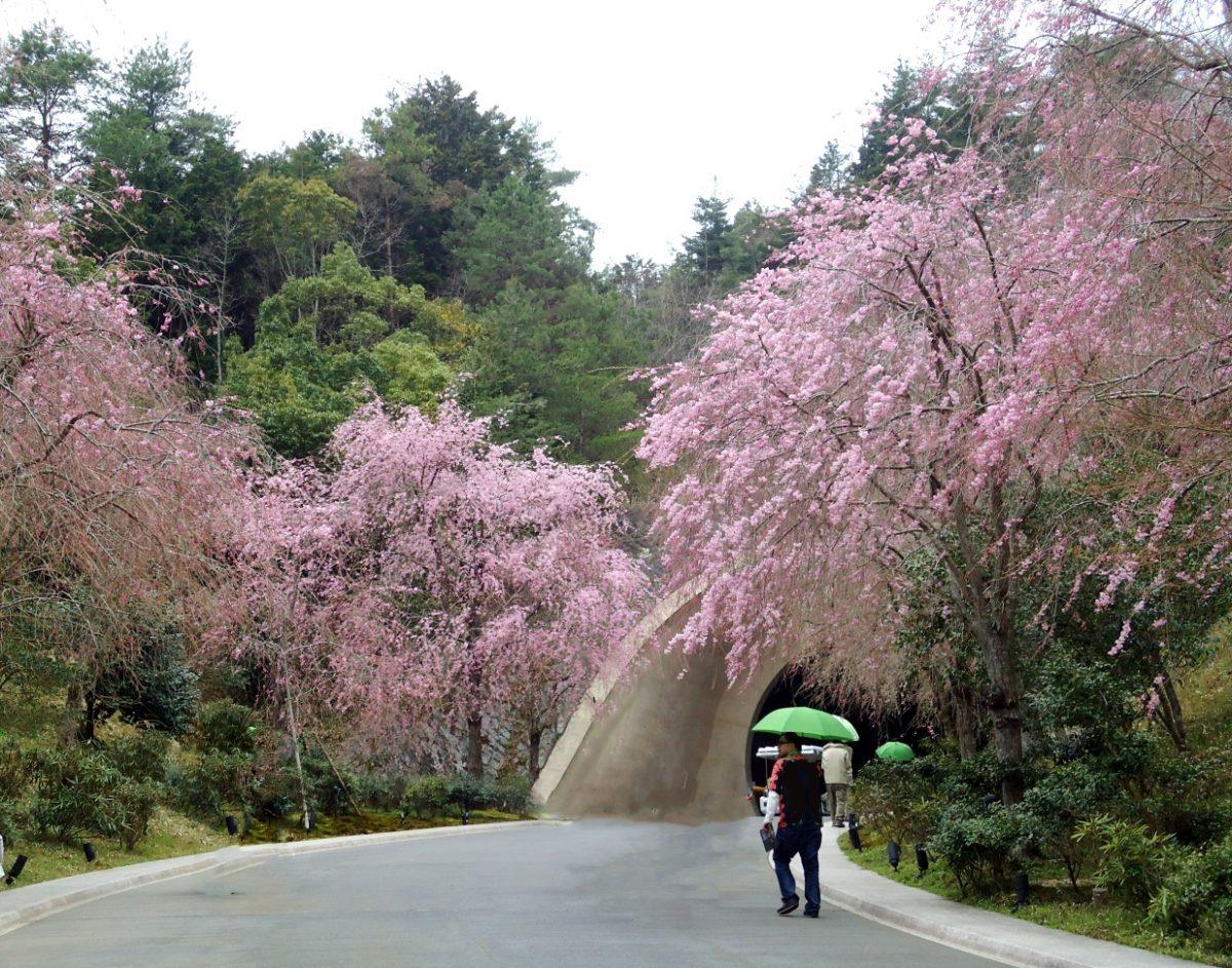 【季節の旅】桜と美術に出あう春の日帰り旅行