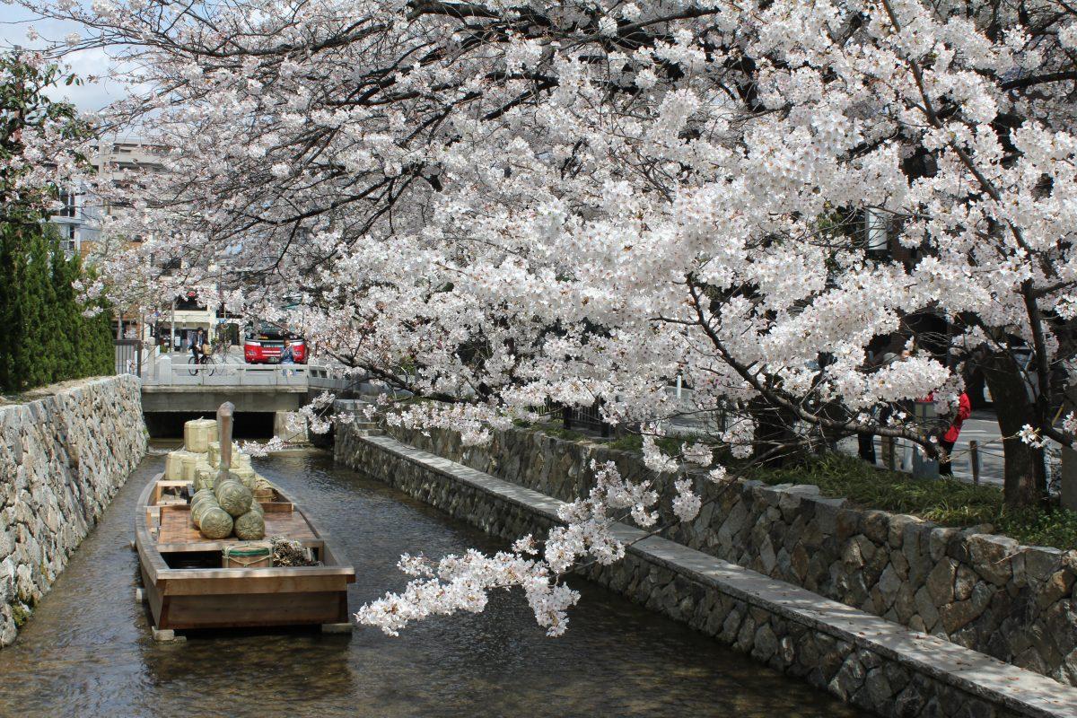 桜 高瀬川